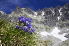 Przyroda Tatr